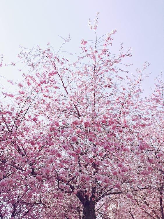arbre, bonic, branques