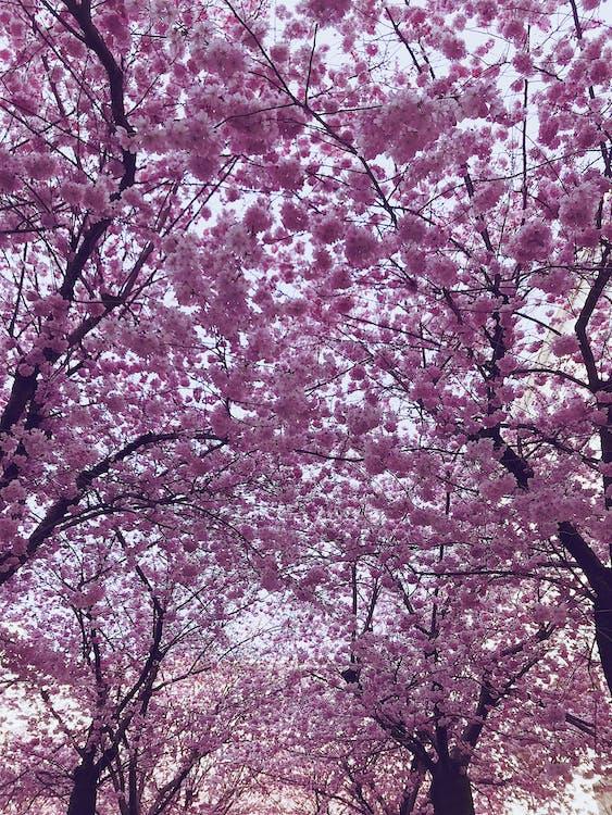 cây, chi nhánh, công viên