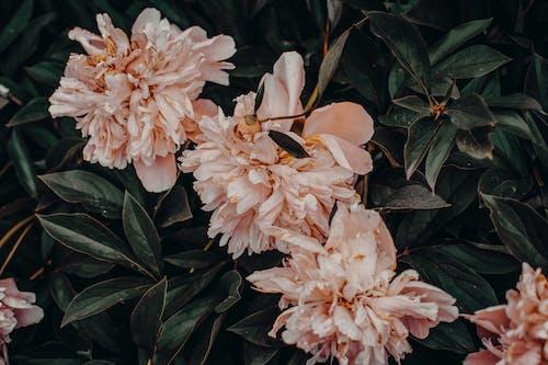 Ảnh lưu trữ miễn phí về cánh hoa, cây, hệ thực vật, hoa