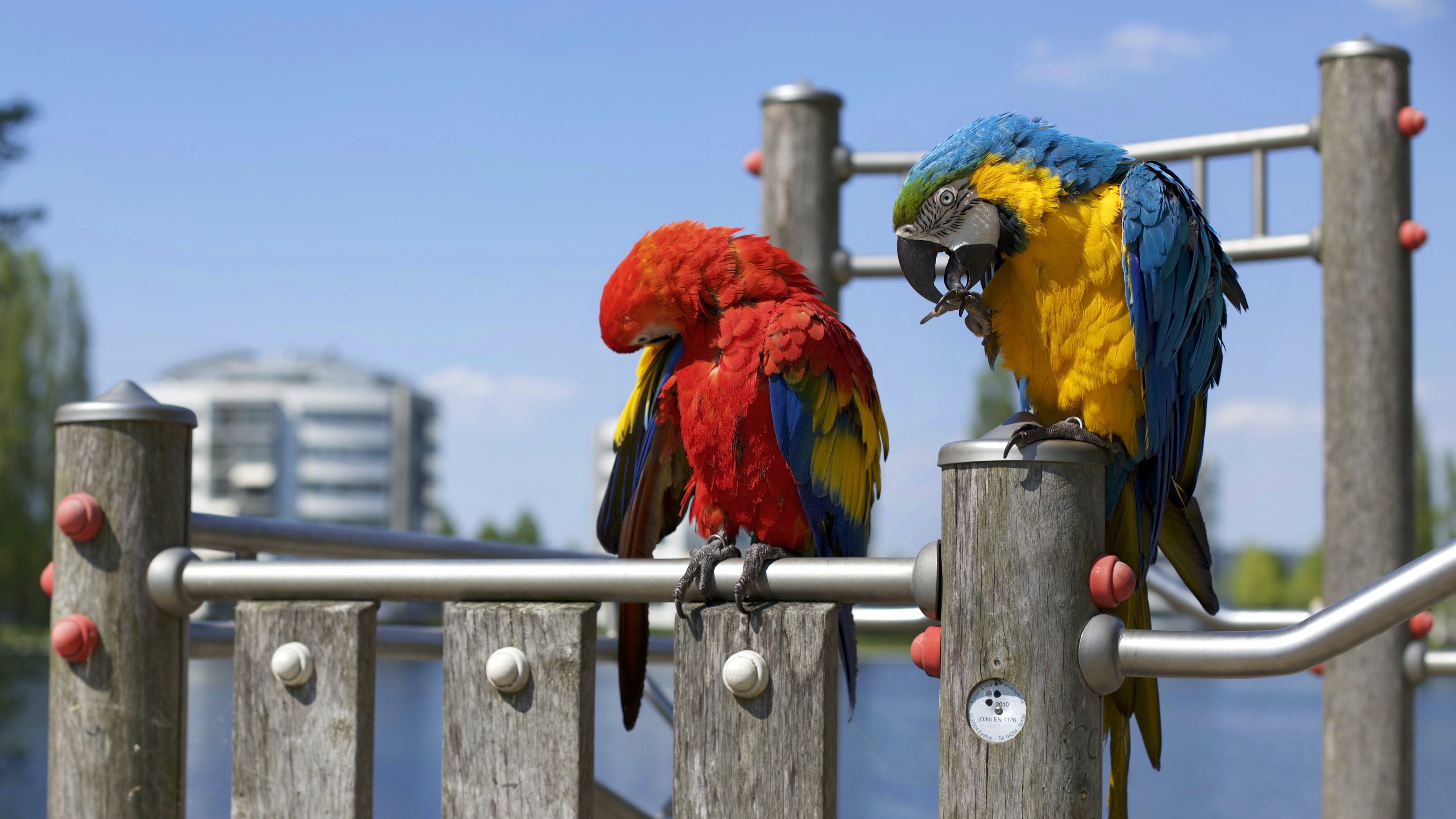 animals, avian, birds