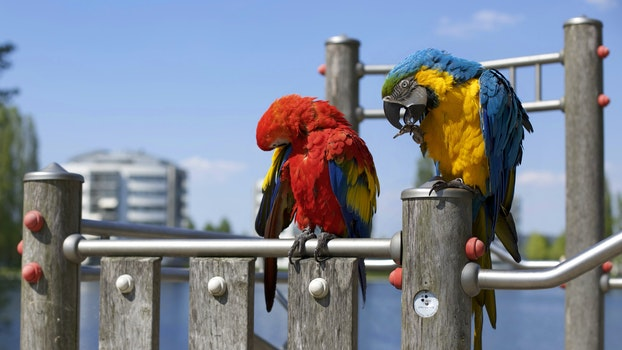 Free stock photo of animals, colorful, colourful, birds