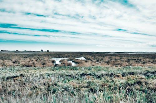 açık hava, bulutlar, çim, gökyüzü içeren Ücretsiz stok fotoğraf
