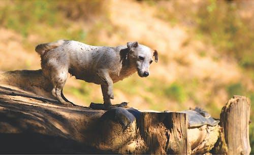 Белая собака, стоящая на деревянном причале