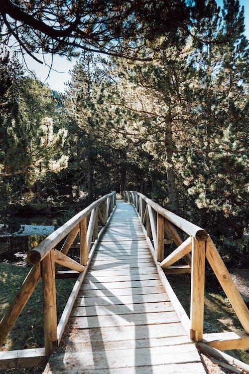 Photos gratuites de adnveture en forêt, cataluna, chemin