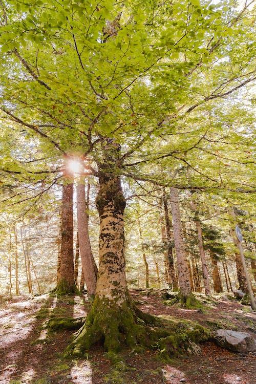 Photos gratuites de bosquet, cataluna, destination de voyage