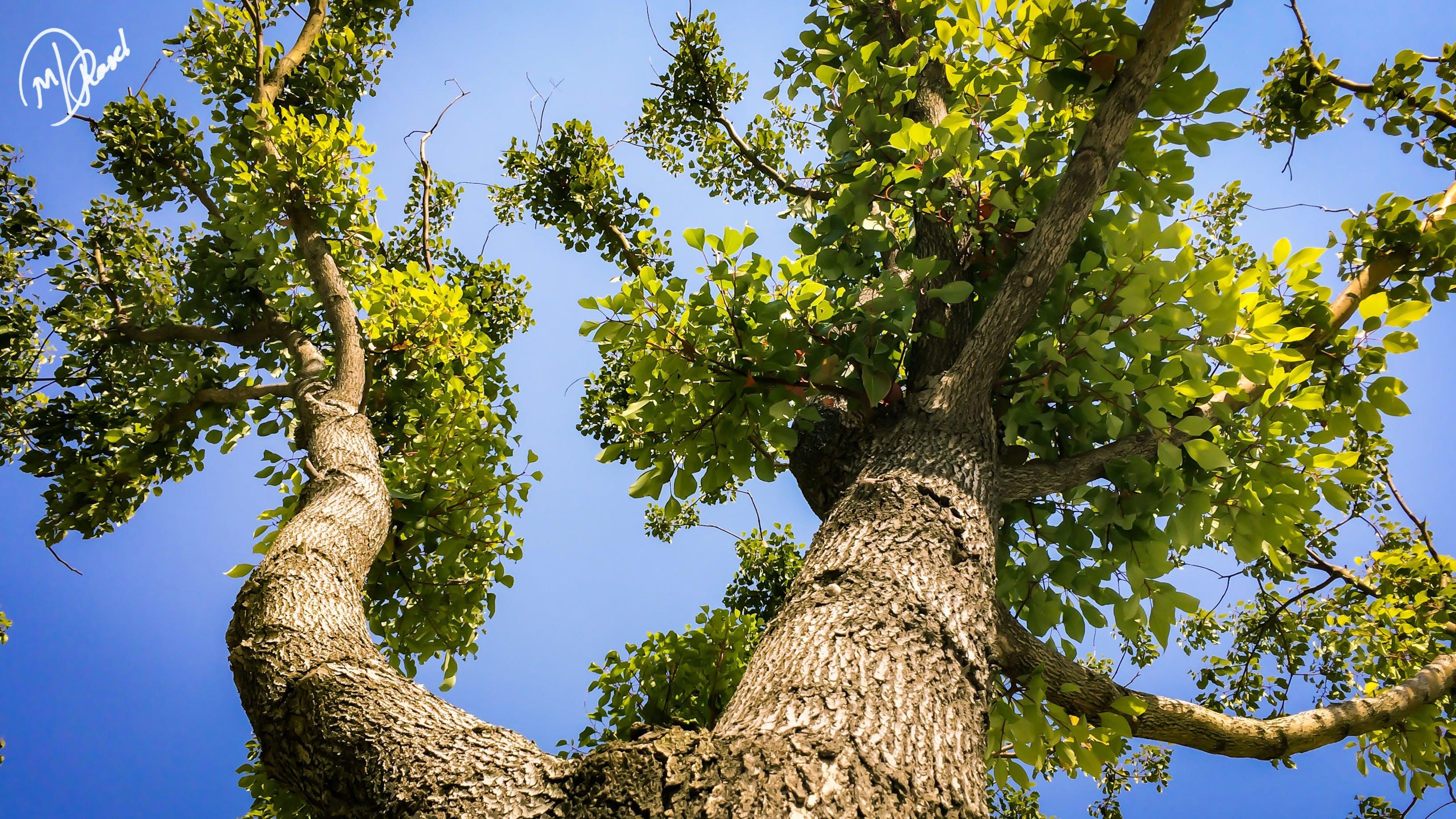 Δωρεάν στοκ φωτογραφιών με δέντρα, δέντρο, δέντρο close shot, κάτω μέρος του δέντρου