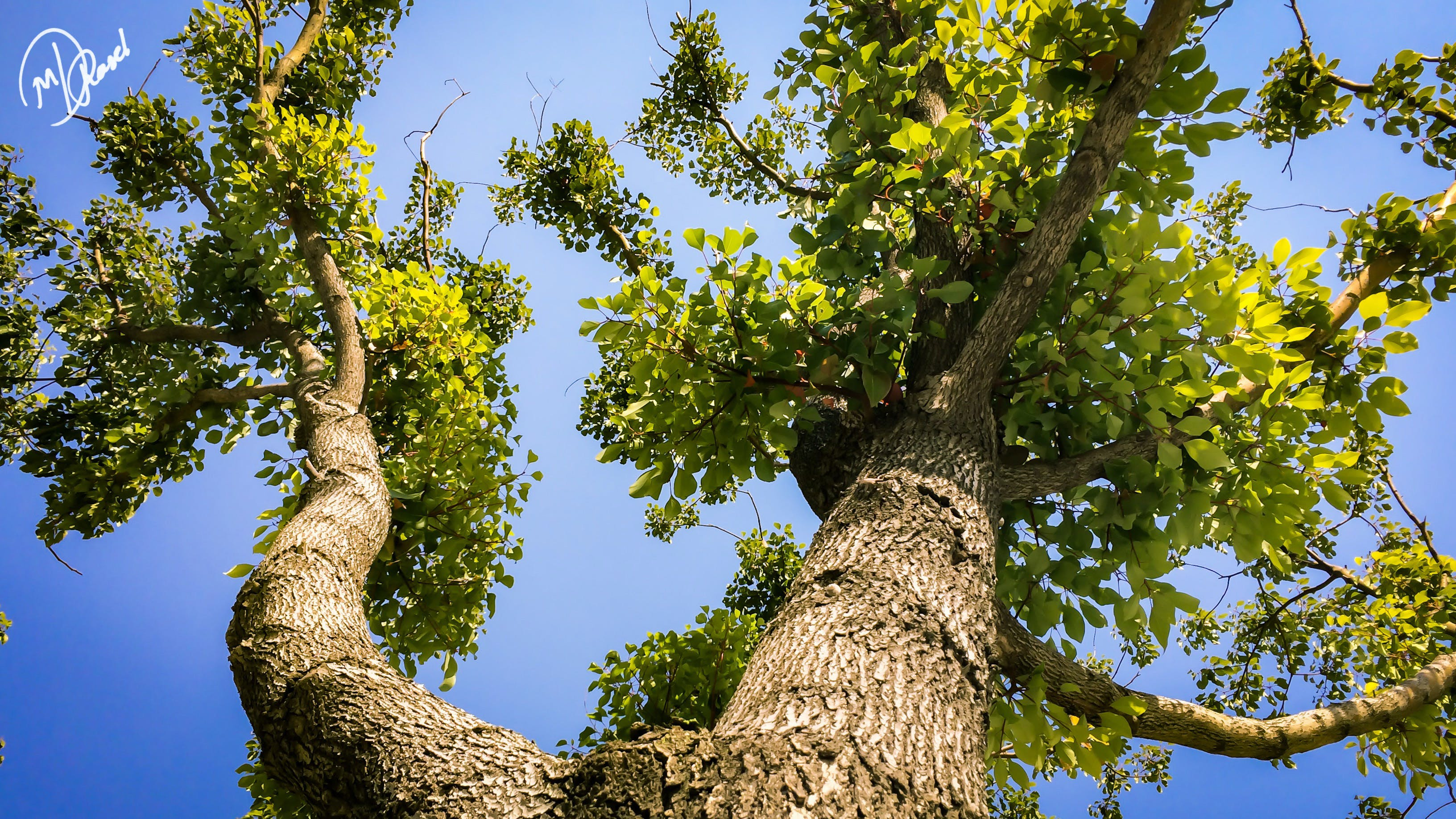 Free stock photo of trees, branches, tree, green