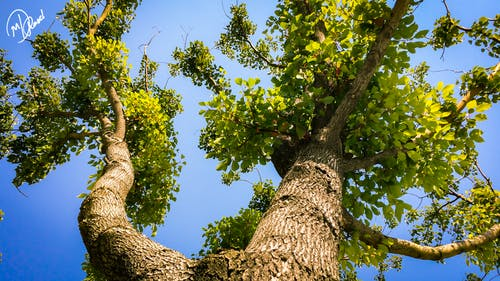 Free stock photo of Another angle, Bottom of tree, branch, branches