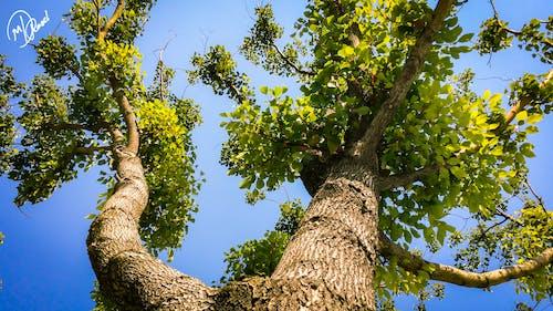 Ilmainen kuvapankkikuva tunnisteilla kudos, oksa, oksat, puu