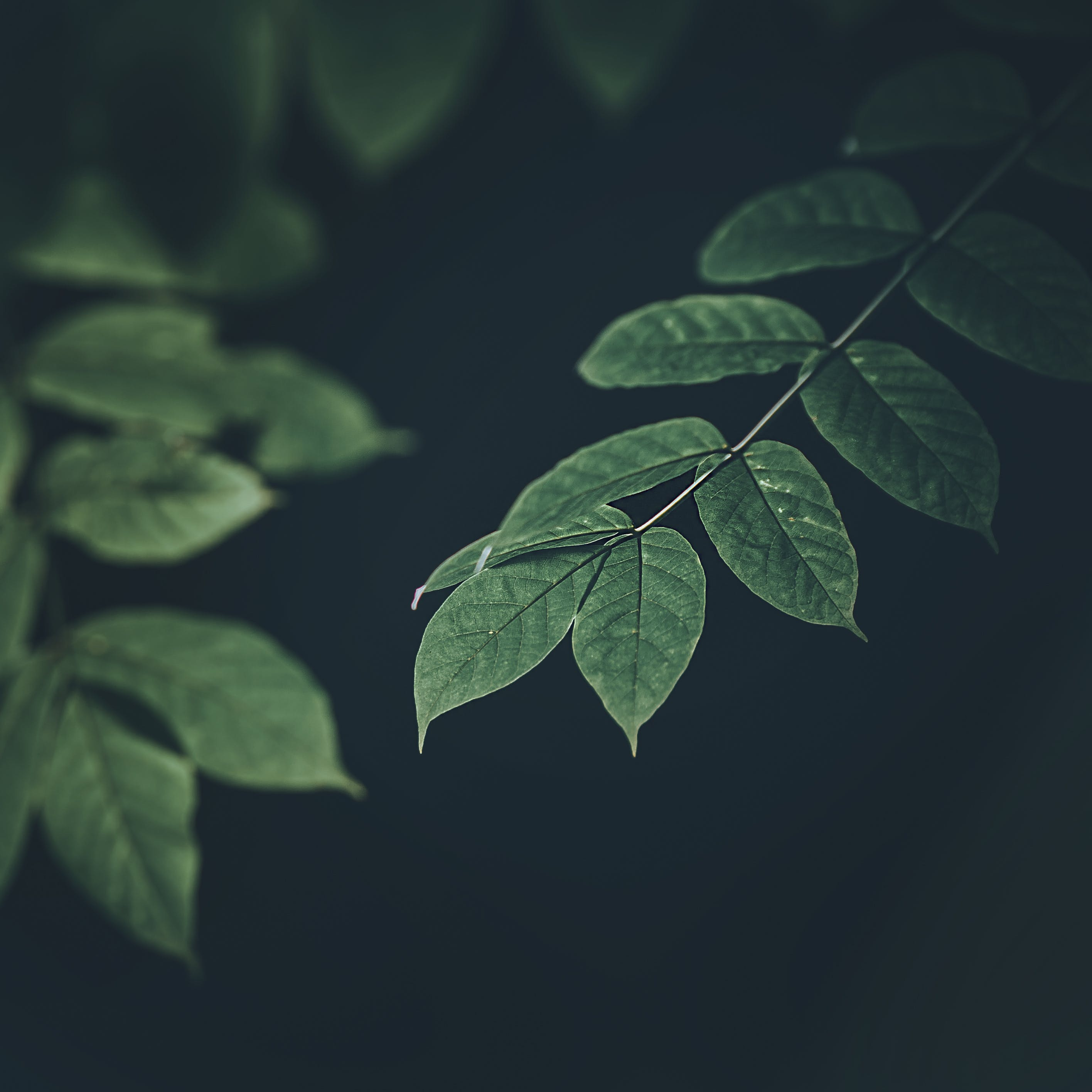 Green Leaf Plants