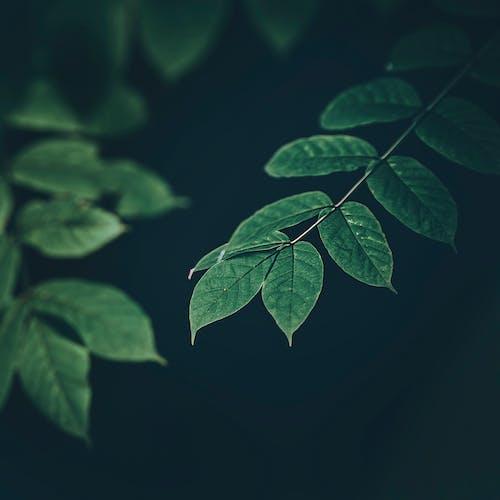 คลังภาพถ่ายฟรี ของ กลางแจ้ง, การเจริญเติบโต, ความบริสุทธิ์, ดอกไม้