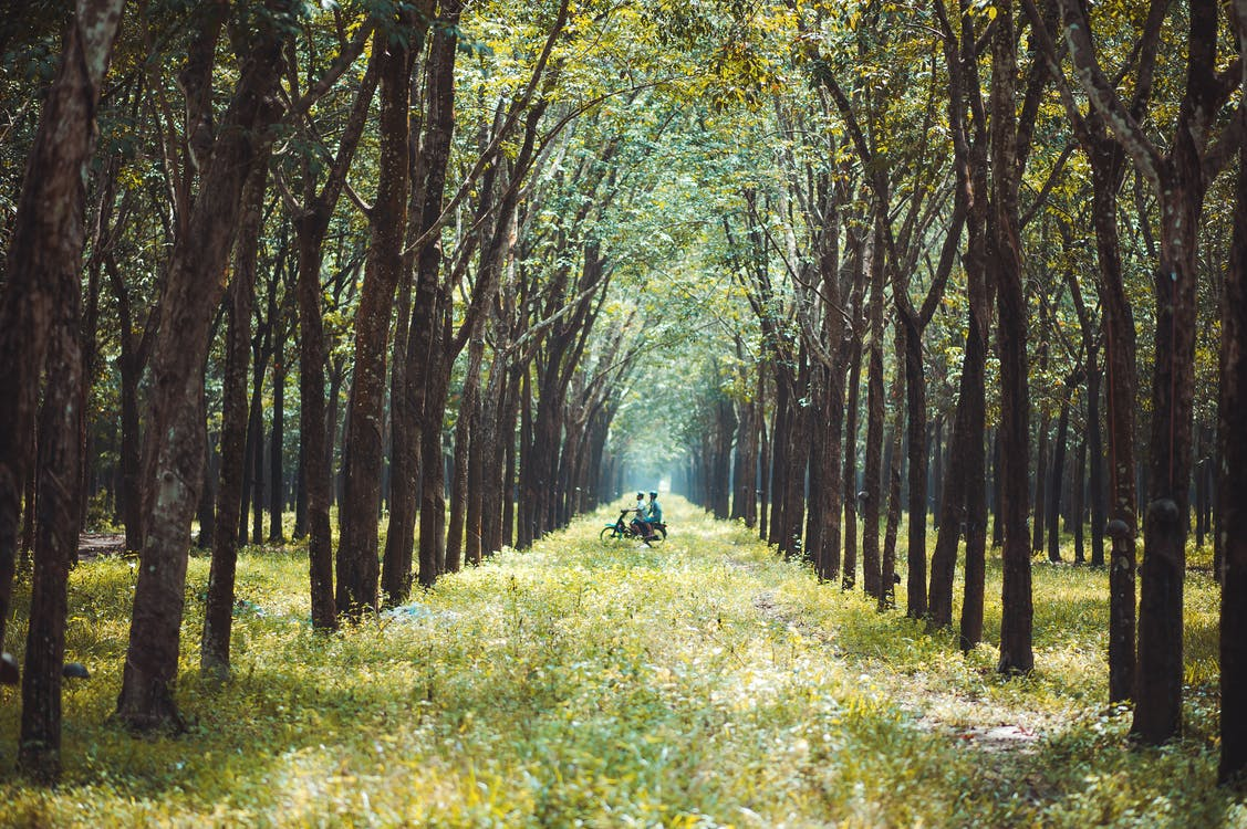 Photo of Two Person Riding Motorcycle in the Middle of  Forest