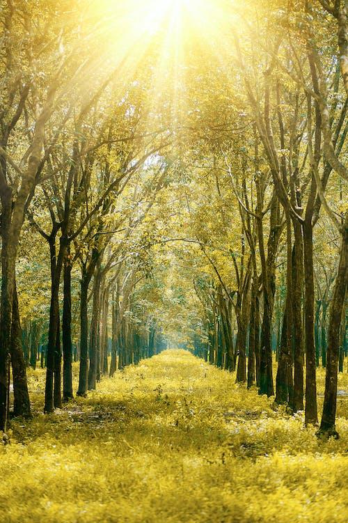 Fotobanka sbezplatnými fotkami na tému dedinský, hmla, idylický, jeseň
