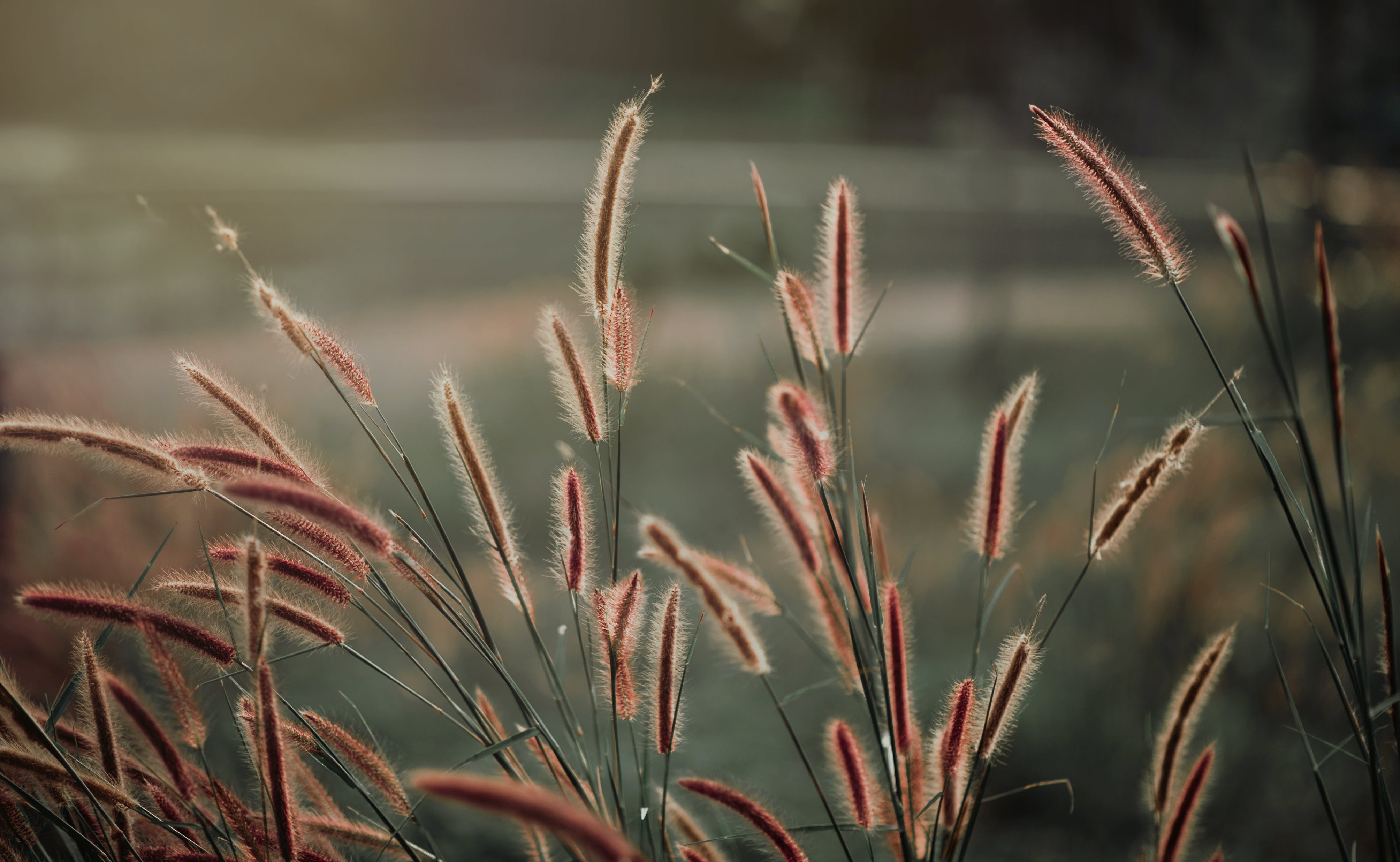 Close-up Photography of Grass