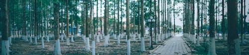 Fotobanka sbezplatnými fotkami na tému exteriéry, krajina, lesy, panoramatický
