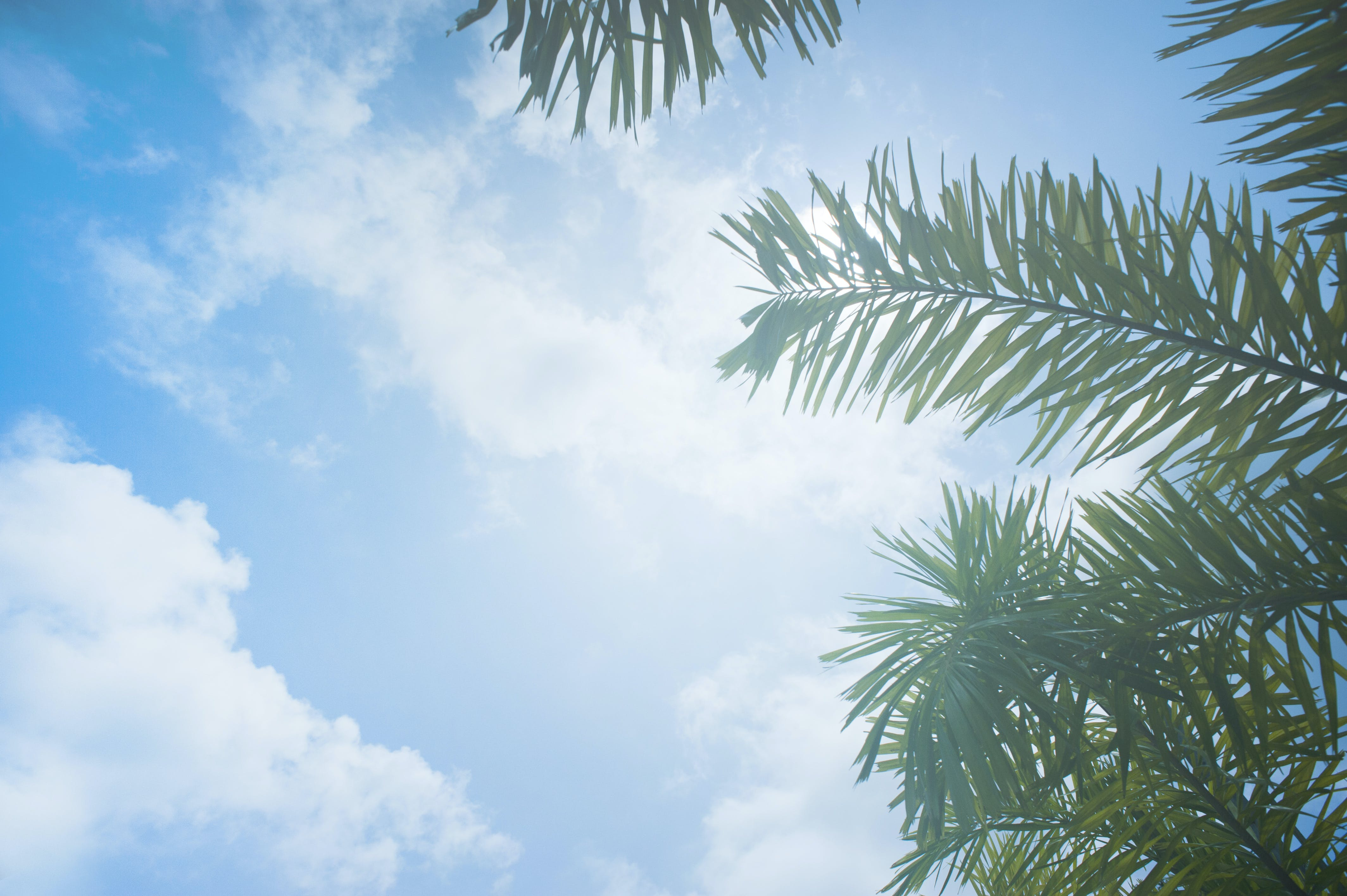 Low Angle Photo of Palm Leaves