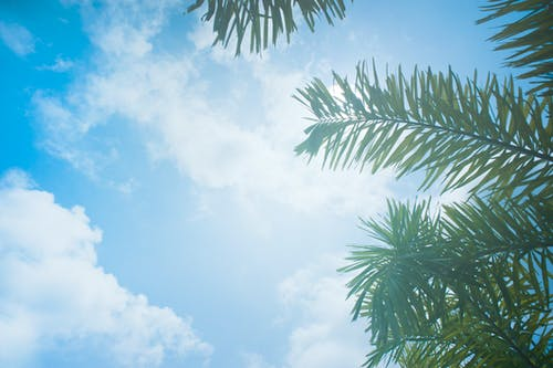 Základová fotografie zdarma na téma fotografie znízkého úhlu, jasný, kokosové palmy, mraky
