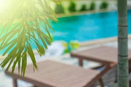 Ảnh lưu trữ miễn phí về bên hồ bơi, cây cọ, ghê ngôi bải biển, gỗ