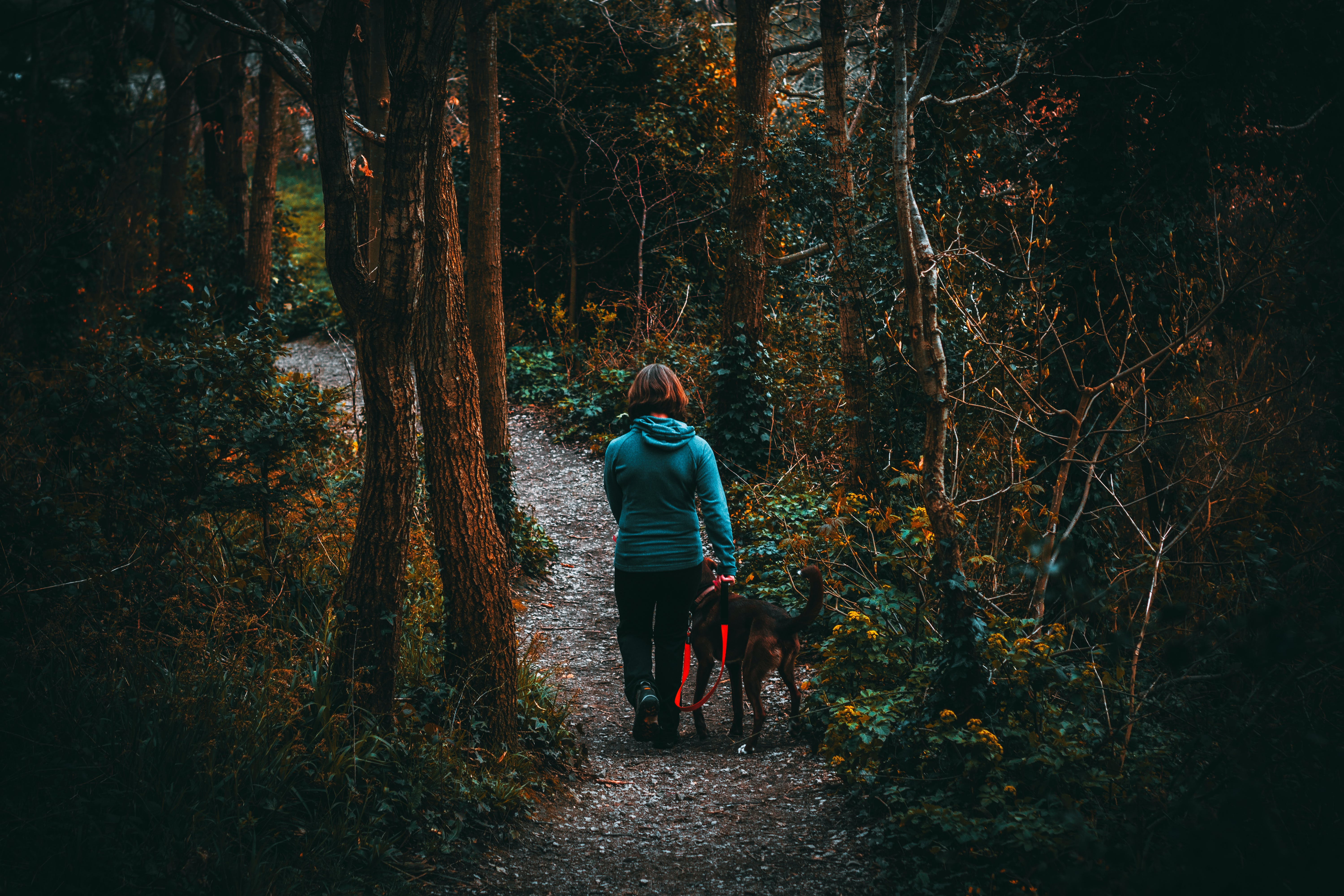 Woman Beside Dog Walking in the Forest Under Tall Trees at Daytime
