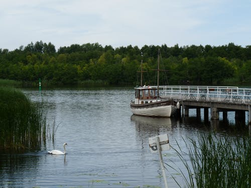 Free stock photo of boat, forest, landing stage