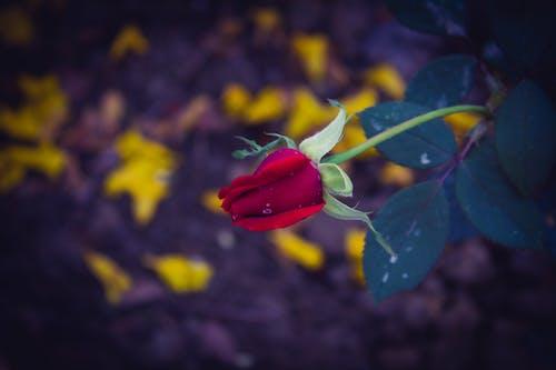 Fotos de stock gratuitas de #outdoorchallenge, flor, flora, floración