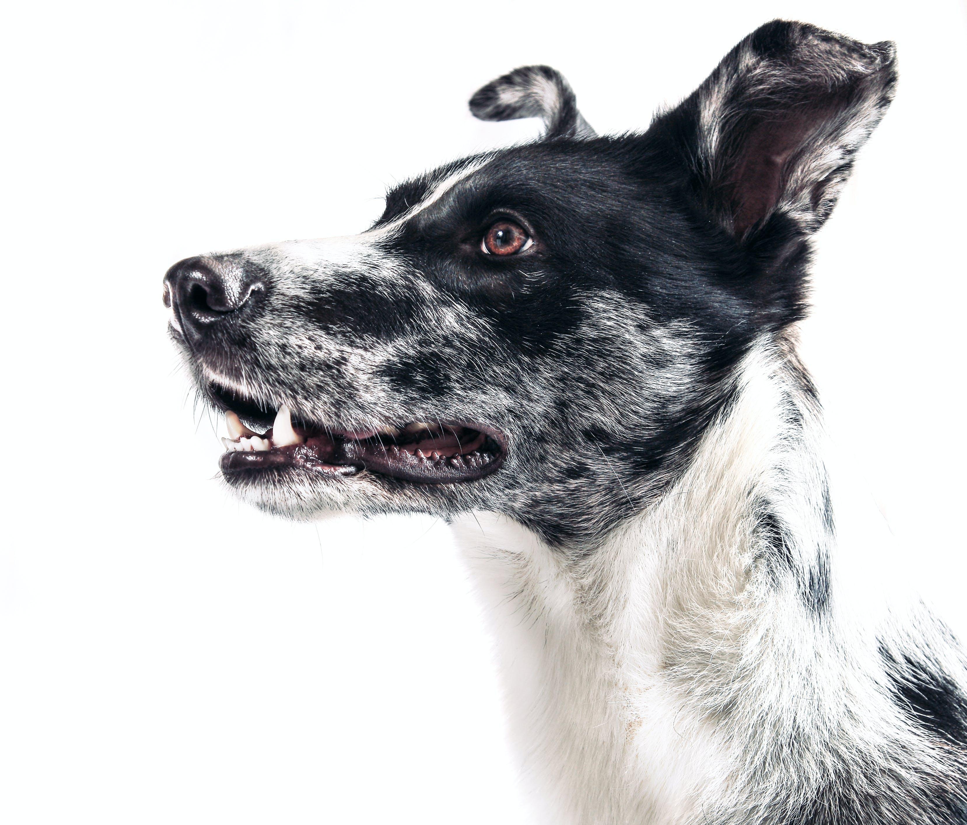 ペット, 動物, 犬の無料の写真素材