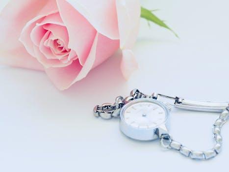 Pink Rose Near Watch