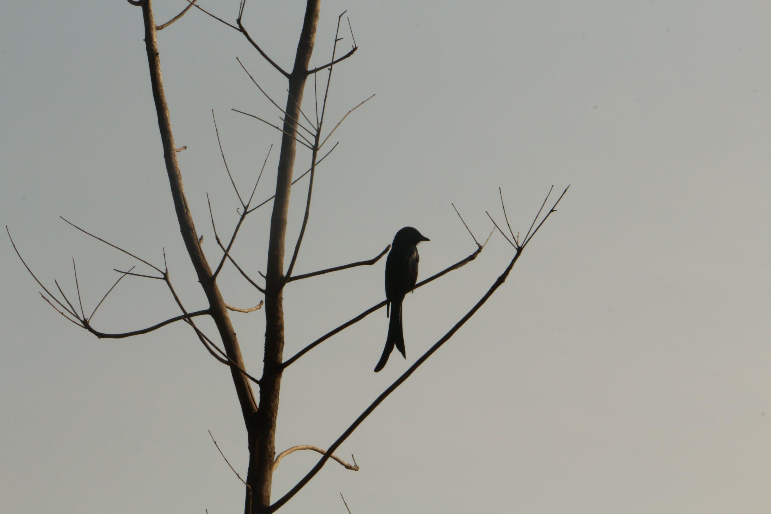 Free stock photo of bird, black and white, beautiful bird