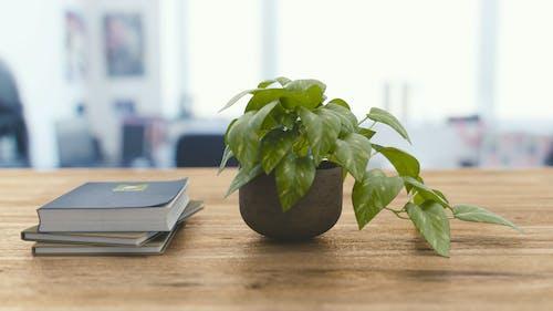 HD 바탕화면, 나무, 세 번째 브래킷, 식물의 무료 스톡 사진