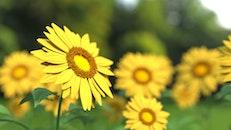flowers, plants, macro