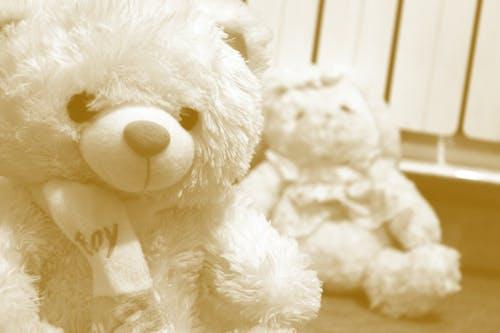 Foto d'estoc gratuïta de petit ós