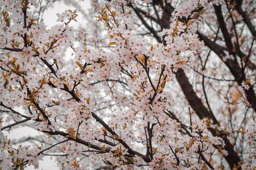 Photos gratuites de bois, branches, brouiller, délicat