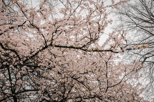 Photography of Tree Branches With Flowers