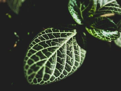 Imagine de stoc gratuită din creștere, fotografie de aproape, lumină, plantă