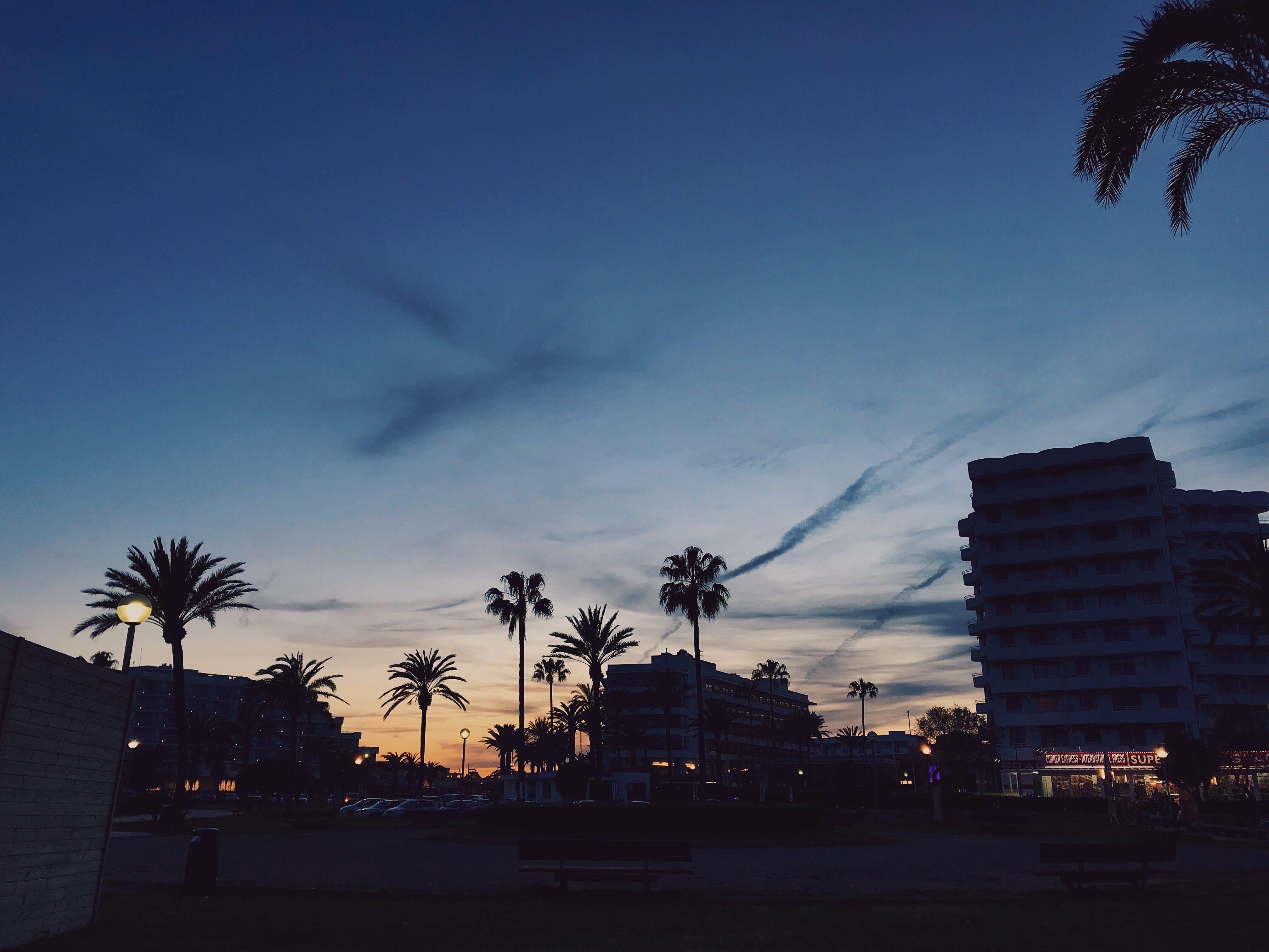 Gratis lagerfoto af farverig, ferie, palmer, solnedgang