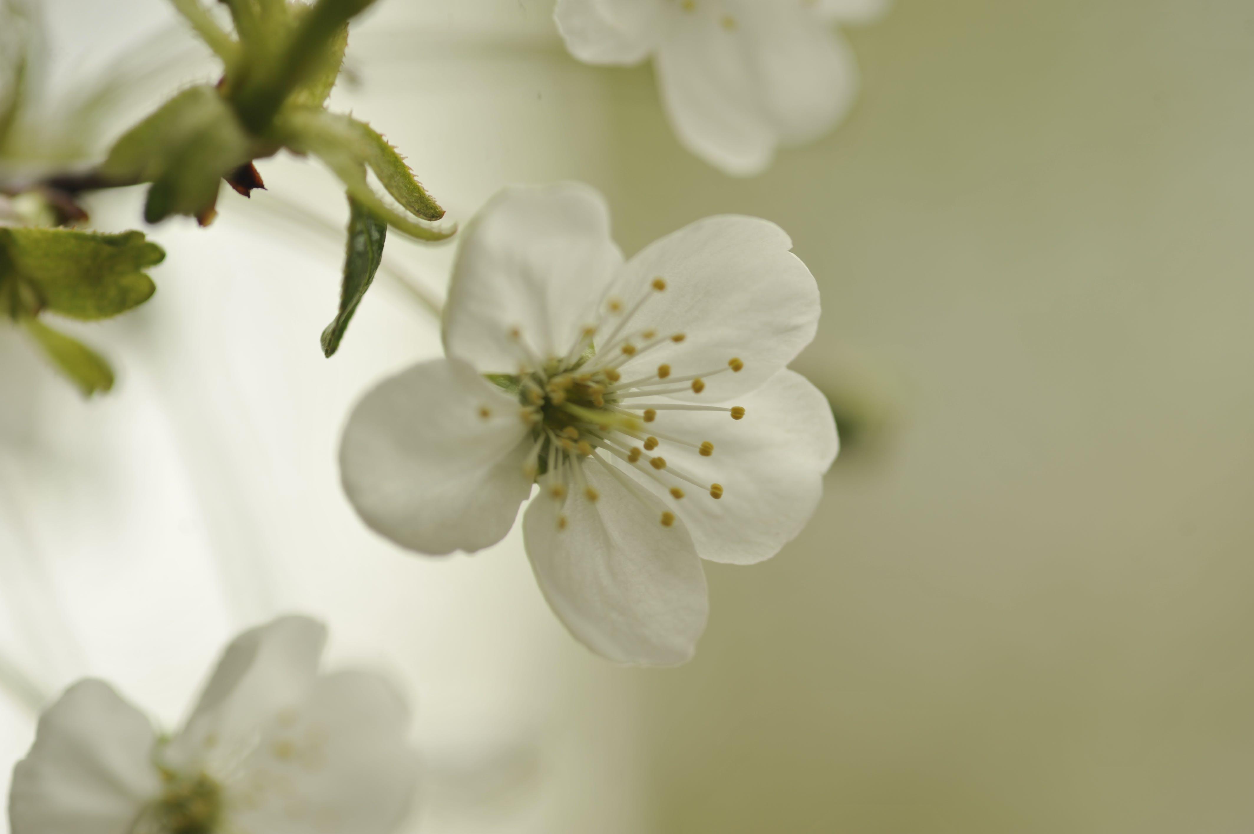 Free stock photo of spring, hot spring, spring flower, spring flowers