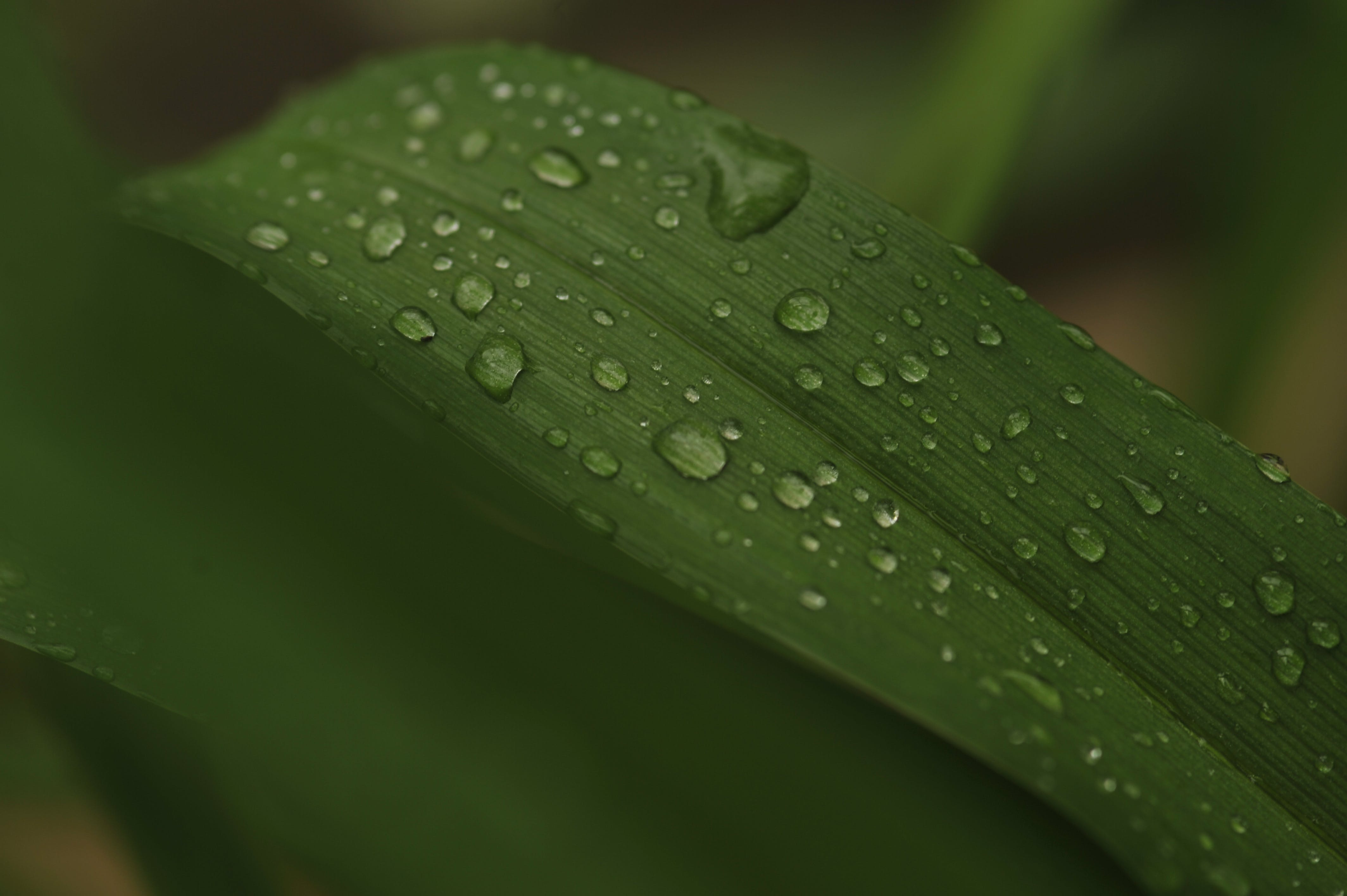 Water Dew Photo of Green Leaf Plant