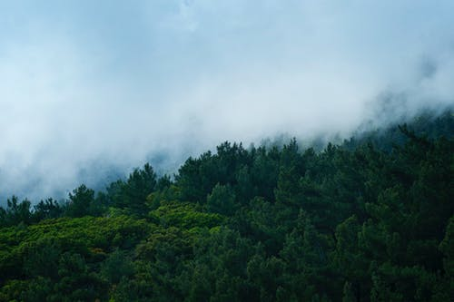 Scenic View of Trees Surrounded by Fog