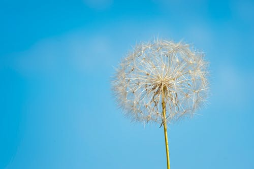 Foto d'estoc gratuïta de brillant, cel, cel blau, clareja