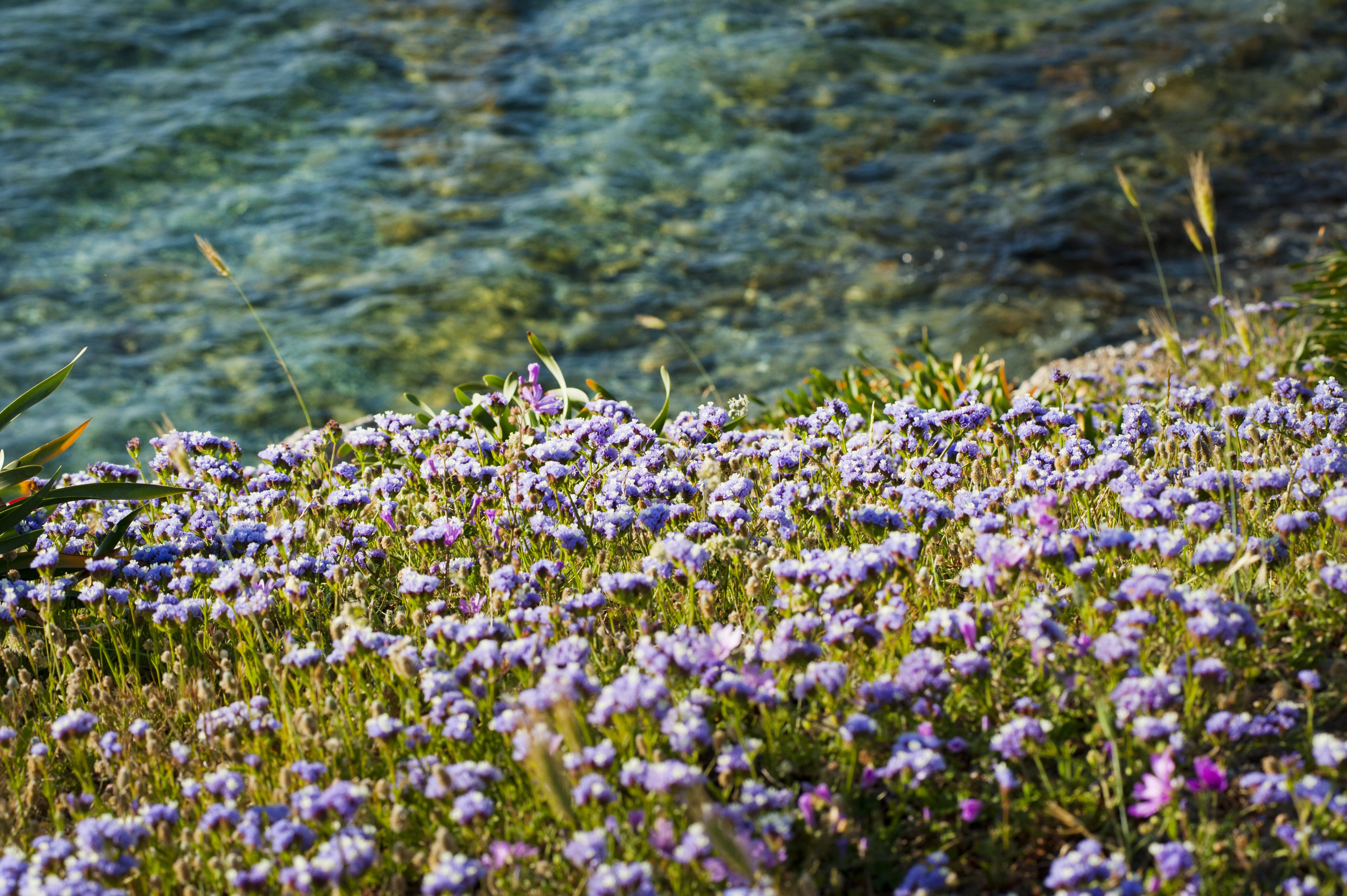 Photo of Field of Flowers Near Water