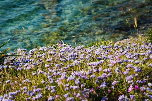 Gratis stockfoto met bloeiend, bloemen, delicaat, fel