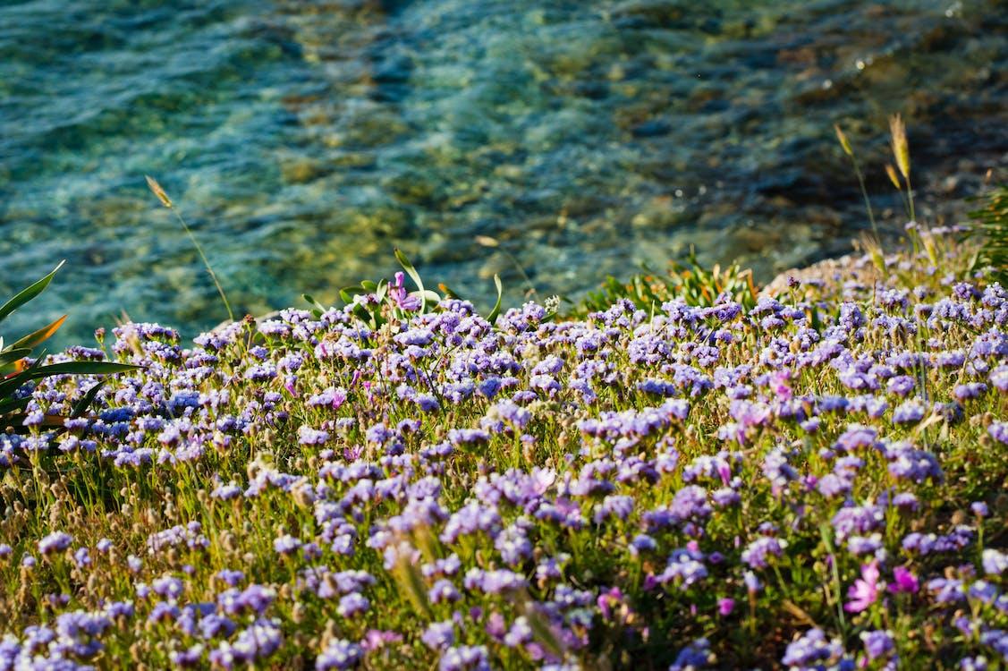 divoký, flóra, hřiště