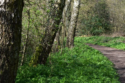 Foto profissional grátis de natureza, parque natural