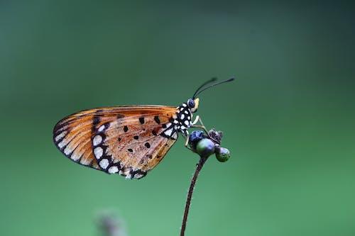 Immagine gratuita di ali, animale, animale selvatico, appollaiato