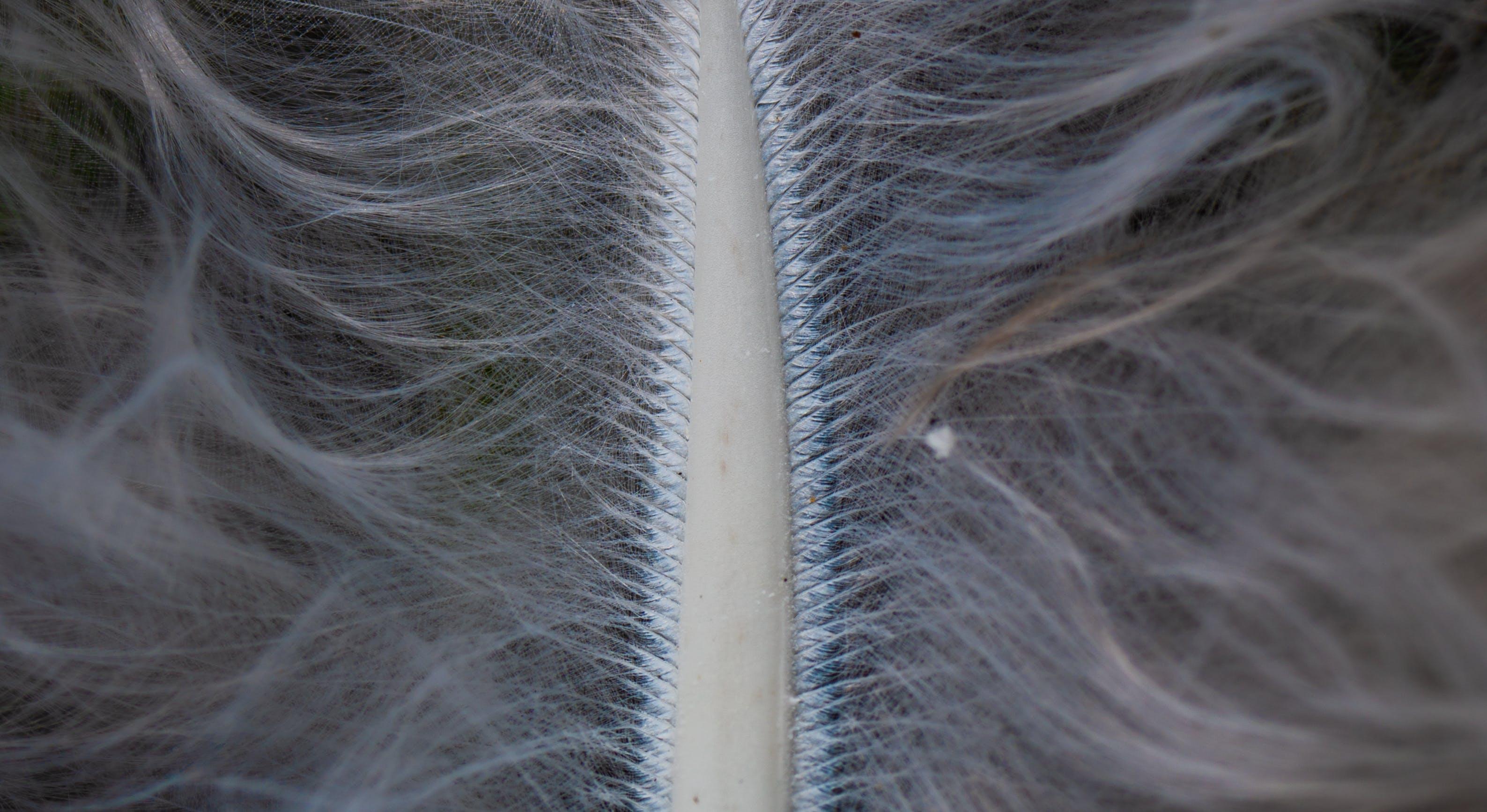 Free stock photo of macro, feather