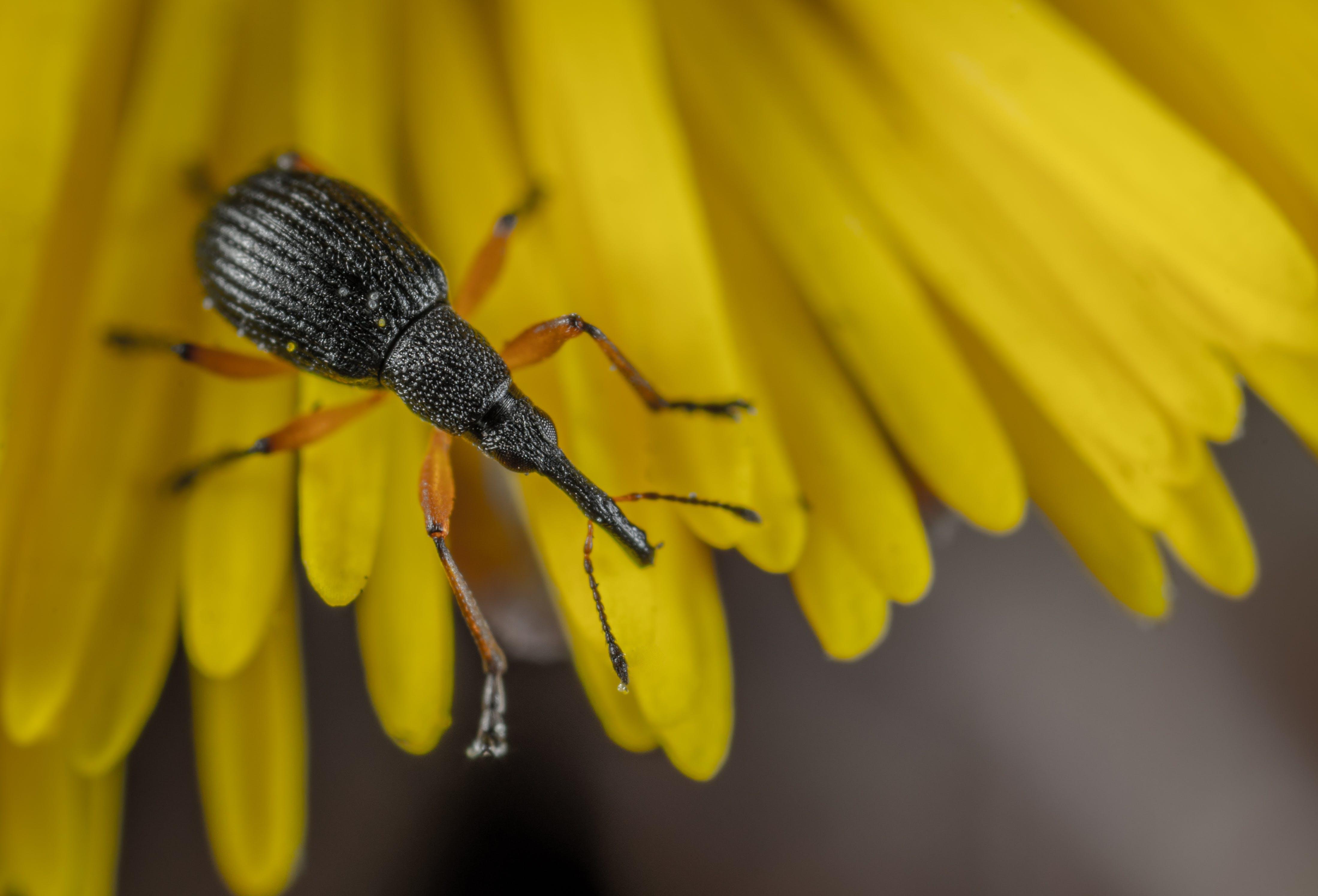 Imagine de stoc gratuită din automobil beetle, floare, floră, fotografie de aproape