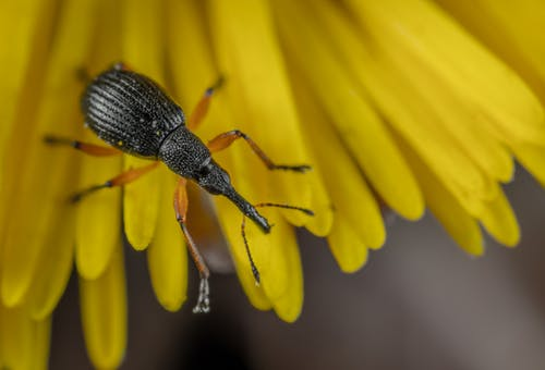 Weevil Closeup Photography