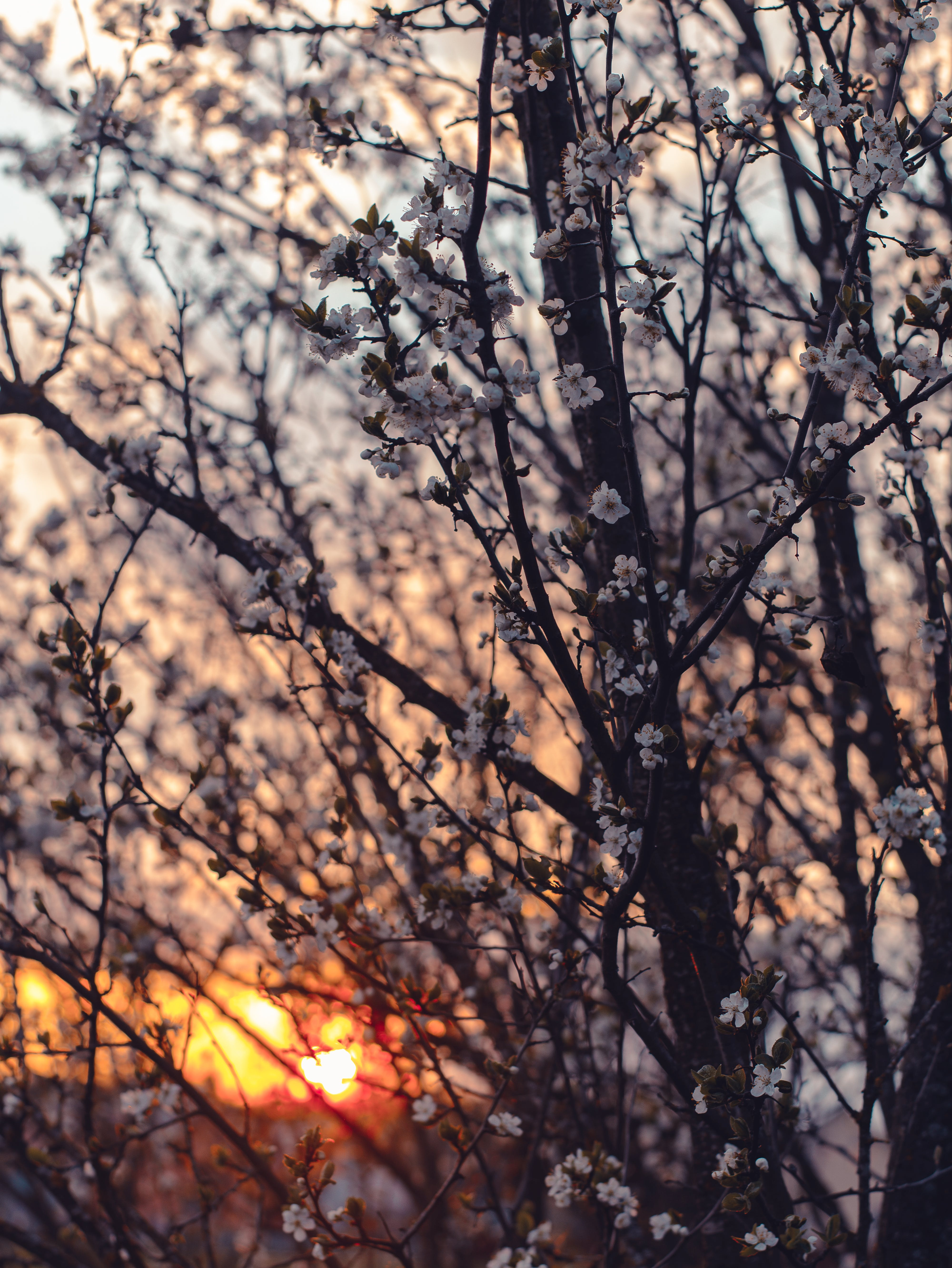 Photography of Cherry Blossom Flowers During Sunset