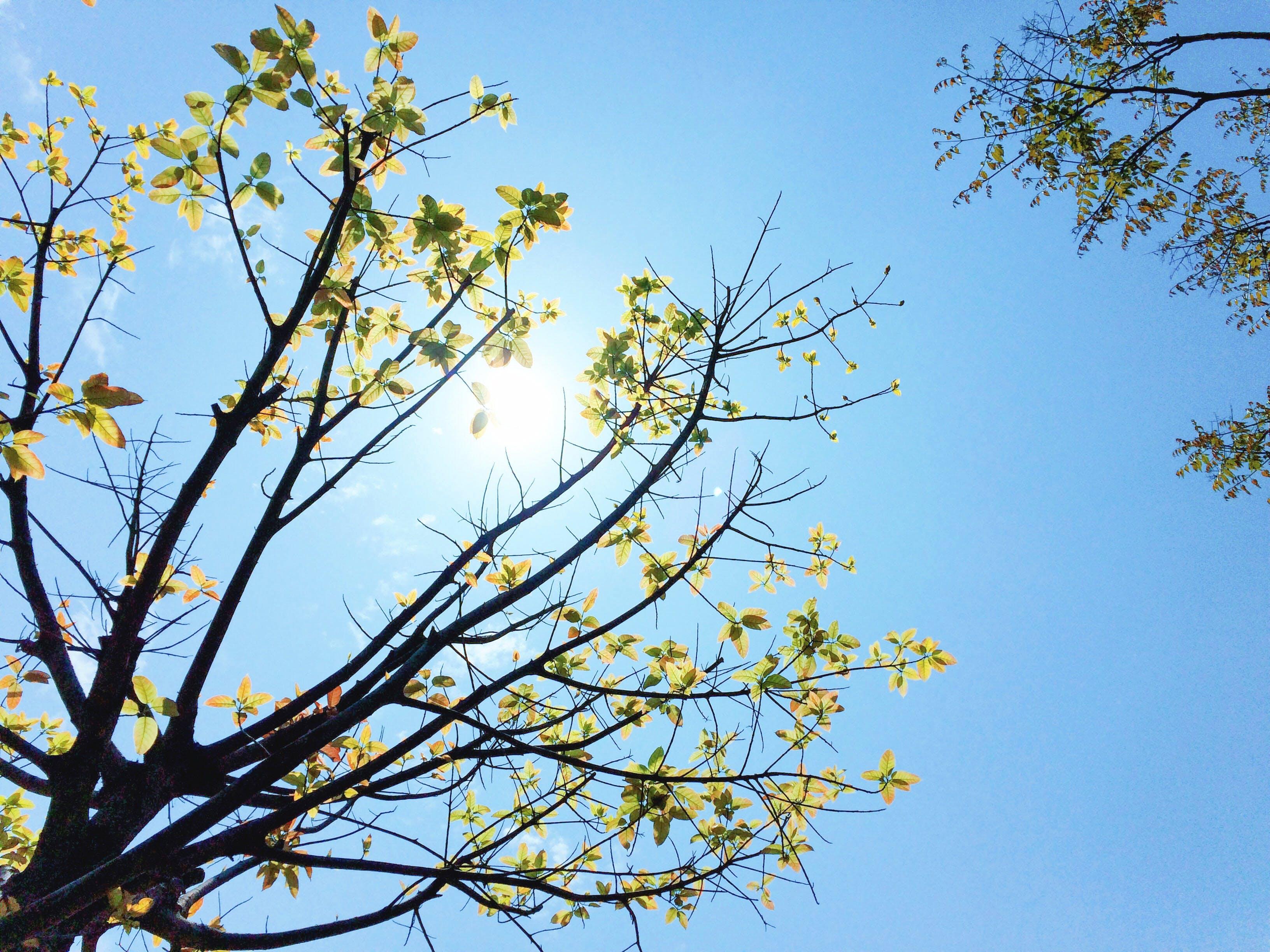 Free stock photo of beautiful, blue sky, fresh, leaves