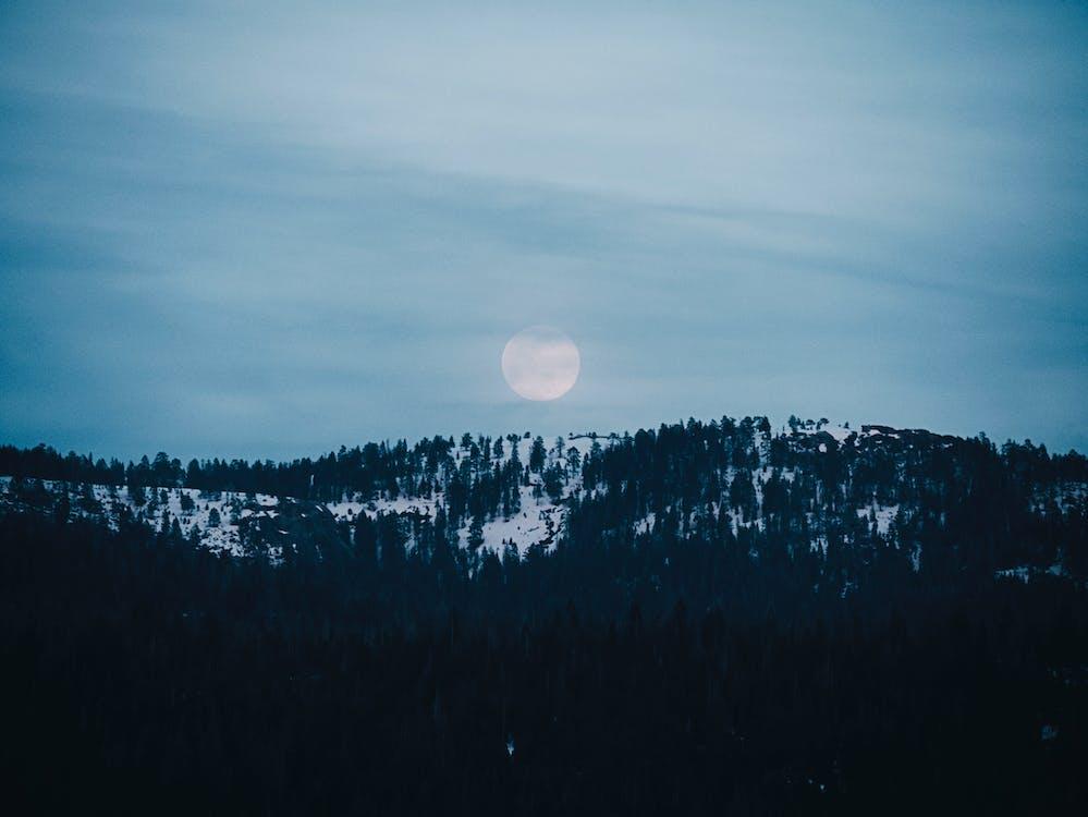 Pine Tress Photography